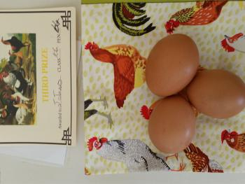 Award winning eggs!