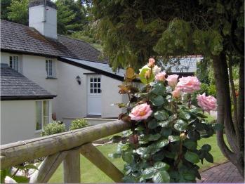 Frogwell - Garden