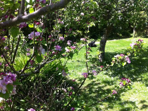 Apple trees  in rear garden
