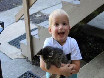 Hold a kitten...