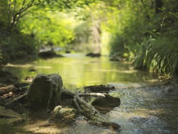 La rivière qui borde notre maison pour vous rafraîchir.