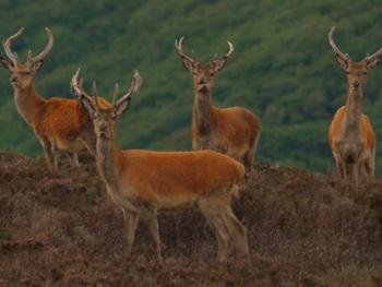 Spot the local Exmoor wildlife on a Deer Safari