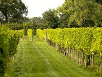 Yorkshire Heart Vineyard Tours