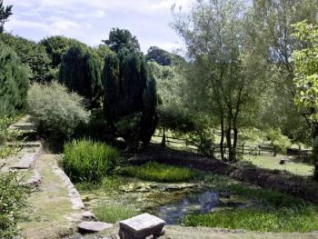 The pond in Ranscombe Manor's grounds - a haven for wildlife
