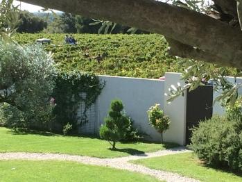 Les célèbres vignobles en sortant de la propriété