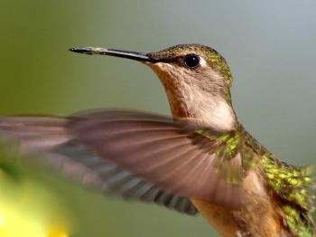 Our hummingbirds delight