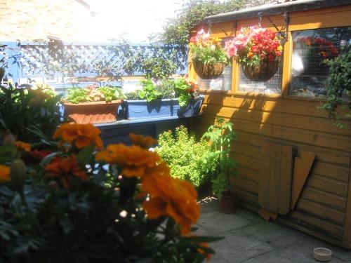 Penryn's back garden