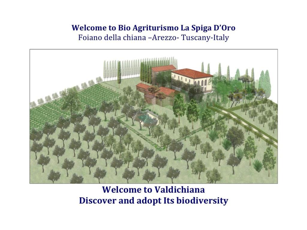 Render La Spiga d'Oro organic farm- Adopt art and Biodiversity